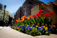 Spring on CPCC Central Campus